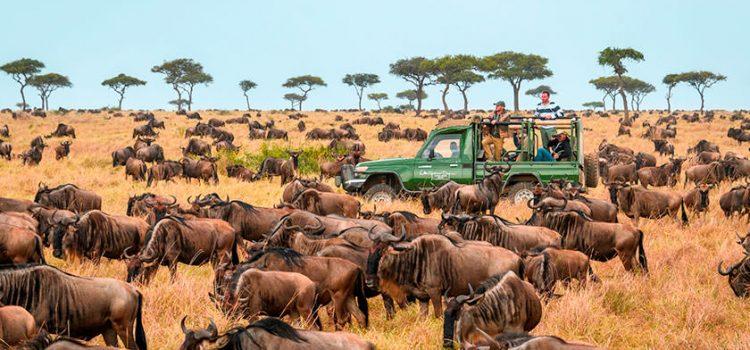 چگونه از سافاری در کنیا بیشترین لذت را ببریم؟